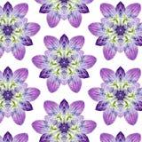 Blumen-Muster F Lizenzfreies Stockfoto