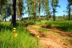 Blumen nähern sich Waldweg Stockfoto