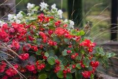 Blumen nach dem Regen Lizenzfreie Stockfotografie