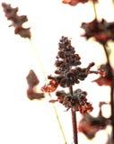 Blumen nach dem Regen stockfotos