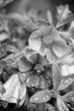 Blumen nach Regen Stockbilder