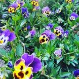 Blumen am Nachmittag Lizenzfreies Stockfoto