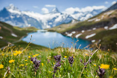 Blumen nahe Bachsee, Alpen, die Schweiz Stockfoto