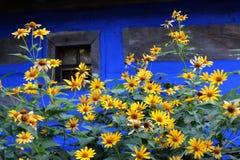 Blumen nahe bei dem Dorfhaus in Ukraine lizenzfreie stockbilder