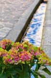 Blumen nahe dem Bach Lizenzfreie Stockbilder