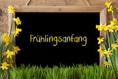 Blumen-Narzisse, Tafel, Fruhelingsanfang bedeutet Anfang des Frühlinges Lizenzfreie Stockfotografie