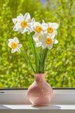 Blumen, Narzissen auf dem Fenster, Lizenzfreies Stockbild