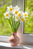 Blumen, Narzissen auf dem Fenster, Stockfotografie