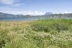 Blumen neben einem blauen See Stockfotos