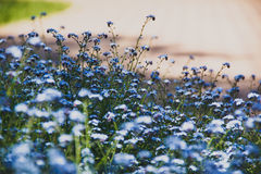 Blumen NU-MA-uita Stockfotos