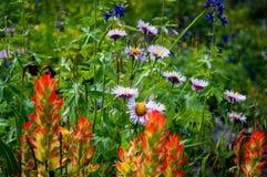 Blumen in Ouray Lizenzfreies Stockfoto