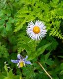 Blumen in Ouray Stockfoto