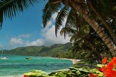 Blumen, Palmebäume auf Paradieslagunestrand Stockfotos