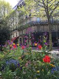 Blumen in Paris Lizenzfreie Stockfotografie