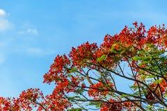 Blumen-Pfau mit blauem Himmel Stockbild