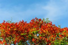 Blumen-Pfau mit blauem Himmel Lizenzfreie Stockfotos