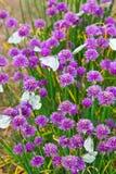 Blumen pflanzen mit Basisrecheneinheiten Stockfotos