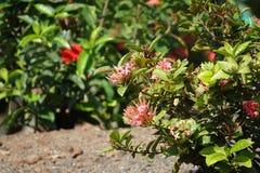 Blumen pflanzen in Rocky Ground Stockbilder