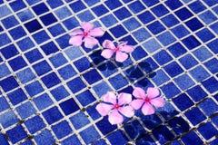 Blumen am Pool Stockbild