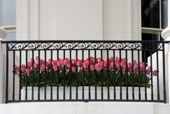 Blumen-Potenziometer Lizenzfreies Stockbild