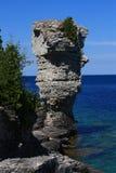 Blumen-Potenziometer-Insel Stockfoto