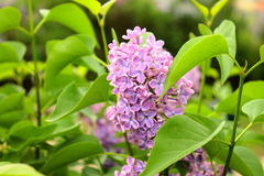 Blumen in Prag Lizenzfreie Stockfotos
