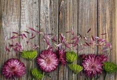 Blumen purpurroten Mamablumen und der Spinnenchrysantheme schließen oben mit den losen Blumenblättern stockfotos