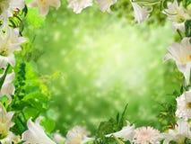 Blumen-Rahmen lizenzfreies stockbild