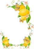 Blumen-Rand mit Zitrone Stockfotografie