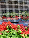 Blumen-Reflexionen stockfotografie