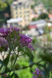 Blumen in Riomaggiore, Italien Lizenzfreie Stockbilder