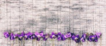 Blumen rochen Veilchen VÃola-Odorata auf grauem hölzernem Brett mit Raum für Text Stockbild