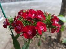 Blumen-Rot Lizenzfreies Stockbild