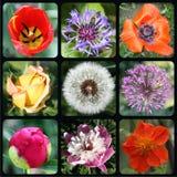 Blumen rund stockbilder