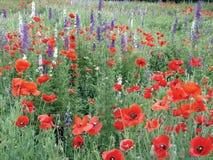 Blumen in Südtexas Stockbild