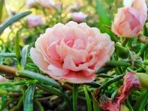 Blumen, schöne, schöne Farben, mehrfarbig, im Garten, Stillstehen, frei stockfotos