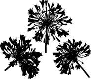 Blumen-Schattenbild Stockbild