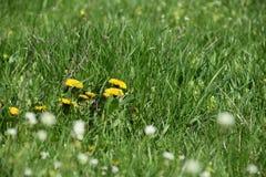 Blumen scheinen Baum Lizenzfreies Stockbild