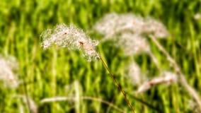 Blumen-Schnee lizenzfreie stockfotografie