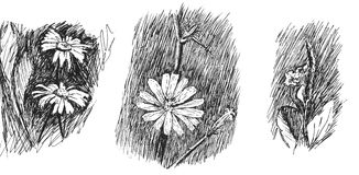 Blumen Schwarzes und Wight vektor abbildung