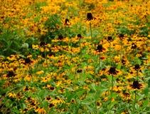 Blumen-Schwestern Lizenzfreie Stockfotos