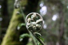 Blumen in seinem natürlichen Umgeben lizenzfreie stockfotografie