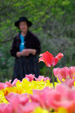 Blumen seiner Jugend Stockfotos