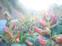 Blumen Seiten-way2 Lizenzfreie Stockfotografie