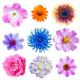 Blumen-Set Lizenzfreies Stockbild