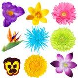 Blumen-Set Stockbilder