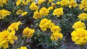 Blumen sind in einem Park Lizenzfreies Stockbild