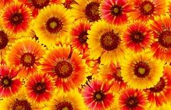 Blumen sind rot und gelb Stockbild