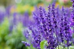 Blumen sind schön und in der Welt natürlich lizenzfreies stockbild