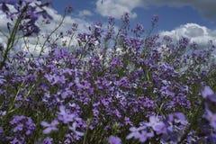 Blumen am Sommer stockbild